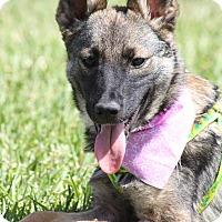 Adopt A Pet :: DUCHESS - Poway, CA