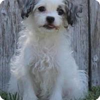 Adopt A Pet :: Dixie - La Habra Heights, CA