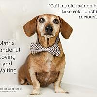 Adopt A Pet :: Matrix - Valley Center, CA