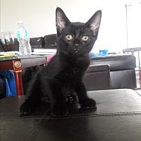 Adopt A Pet :: Lola - New Port Richey, FL