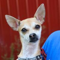 Adopt A Pet :: Gizmo - Elkhorn, WI