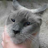 Adopt A Pet :: Mr. Wicket - Davis, CA