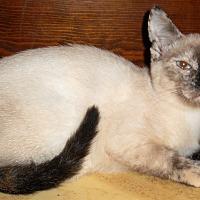 Adopt A Pet :: Xenia - Chattanooga, TN