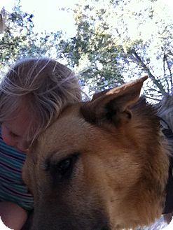 German Shepherd Dog Mix Dog for adoption in Louisville, Kentucky - Dougie