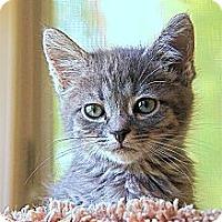 Adopt A Pet :: Maisy - Victor, NY