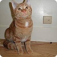 Adopt A Pet :: Seamus - Milwaukee, WI