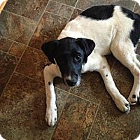 Adopt A Pet :: Sara - Albany, NY