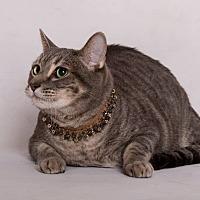 Adopt A Pet :: Monty - Sherman Oaks, CA