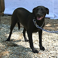 Adopt A Pet :: Licorice - Ashland, AL