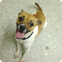 Adopt A Pet :: Pugsly - Pompton Lakes, NJ