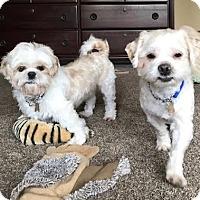 Adopt A Pet :: WAFFLES & PANCAKE - Los Angeles, CA