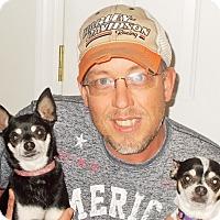 Adopt A Pet :: Festiss - Plain City, OH
