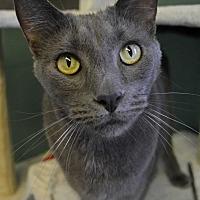Adopt A Pet :: Steve - Michigan City, IN