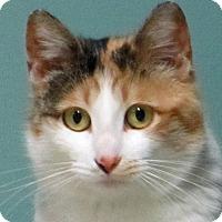 Adopt A Pet :: Camille (Woodbury Petsmart) - Roseville, MN