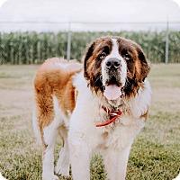 Adopt A Pet :: Peanut - Hawk Point, MO