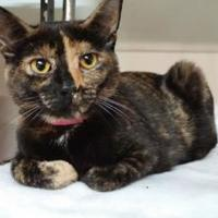 Adopt A Pet :: Shelley - Erie, PA