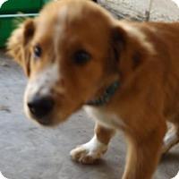 Adopt A Pet :: Jiff - Zaleski, OH