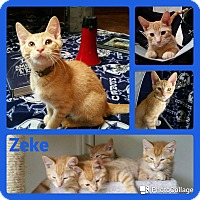 Adopt A Pet :: Zeke - Arlington/Ft Worth, TX