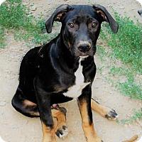Adopt A Pet :: HUEY - Canton, GA