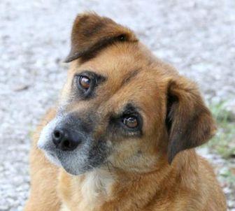 Shepherd (Unknown Type) Mix Dog for adoption in Loxahatchee, Florida - Willow