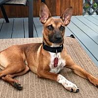 Adopt A Pet :: Ernie Sesame Street *LOCAL* - Wakefield, RI