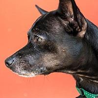 Adopt A Pet :: Jojo 225544 - Petaluma, CA