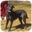 Photo 3 - Labrador Retriever Mix Dog for adoption in Glenburn, Maine - Ellie