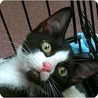 Adopt A Pet :: Puff #4 - Lunenburg, MA