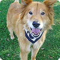 Adopt A Pet :: Flannigan loving boy - Sacramento, CA