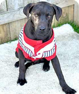 Labrador Retriever Mix Dog for adoption in Darlington, South Carolina - Willy