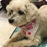 Adopt A Pet :: Misha - Freeport, NY