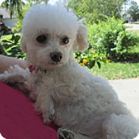 Adopt A Pet :: MILLY LILLY - Melbourne, FL