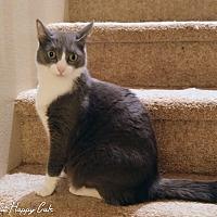 Adopt A Pet :: Momo - Honolulu, HI