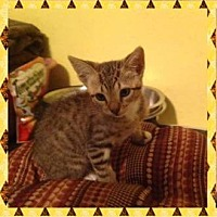 Adopt A Pet :: Puma - Marianna, FL