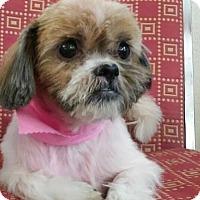 Adopt A Pet :: AMBER - Poway, CA