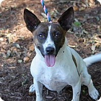 Adopt A Pet :: Wishbone in CT - East Hartford, CT
