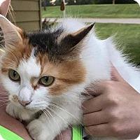 Adopt A Pet :: Violet - Caro, MI