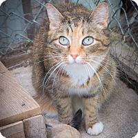 Adopt A Pet :: Piper - Corinne, UT