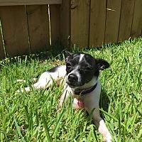 Adopt A Pet :: Zippy - Toronto, ON