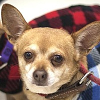 Adopt A Pet :: Chiquita – 26722 & Pequena - 26723 - Petaluma, CA