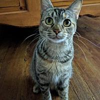 Adopt A Pet :: Gypsie - McKinney, TX