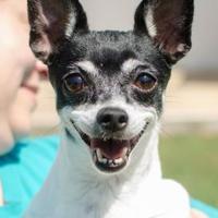 Adopt A Pet :: Ivy - Greenwood, SC