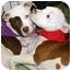 Photo 3 - American Bulldog Mix Puppy for adoption in Marietta, Georgia - Pong