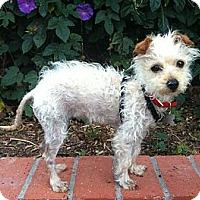 Adopt A Pet :: Q-tip - Goleta, CA