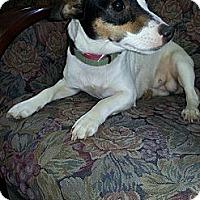 Adopt A Pet :: Sasha - Crawfordville, FL