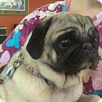 Adopt A Pet :: Jazmyn - Eagle, ID