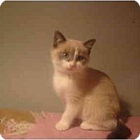 Adopt A Pet :: Gussie - Muncie, IN