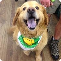 Adopt A Pet :: King - Foster, RI