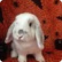 Adopt A Pet :: Charmin - Paramount, CA