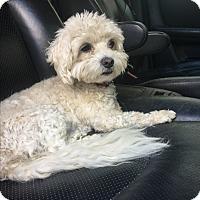 Adopt A Pet :: Lucky - Van Nuys, CA